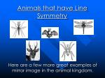 animals that have line symmetry