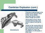 cambrian explosion cont