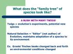 what does the family tree of species look like