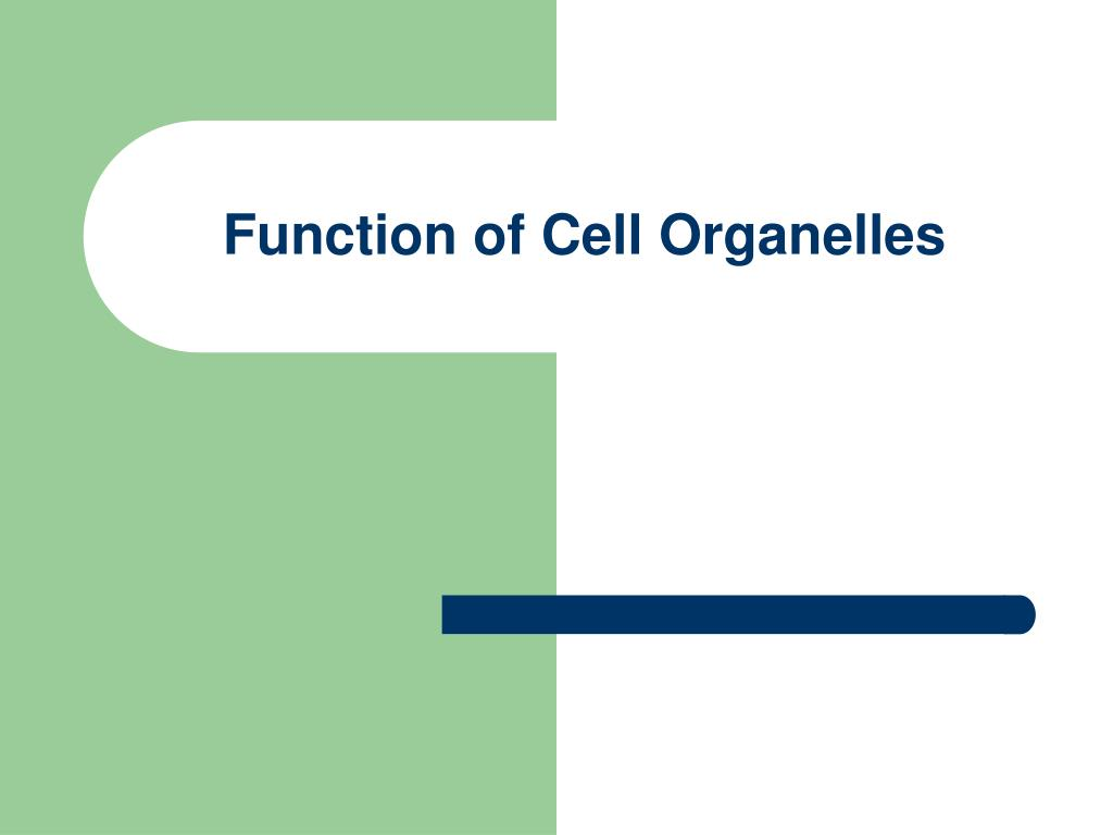 function of cell organelles l.