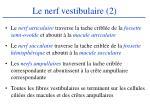 le nerf vestibulaire 2