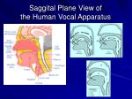 saggital plane view of the human vocal apparatus25