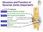 structure and function of synovial joints important