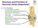 structure and function of synovial joints important5