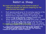 rabbit vs sheep