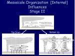 mesoscale organization internal influences stage ii