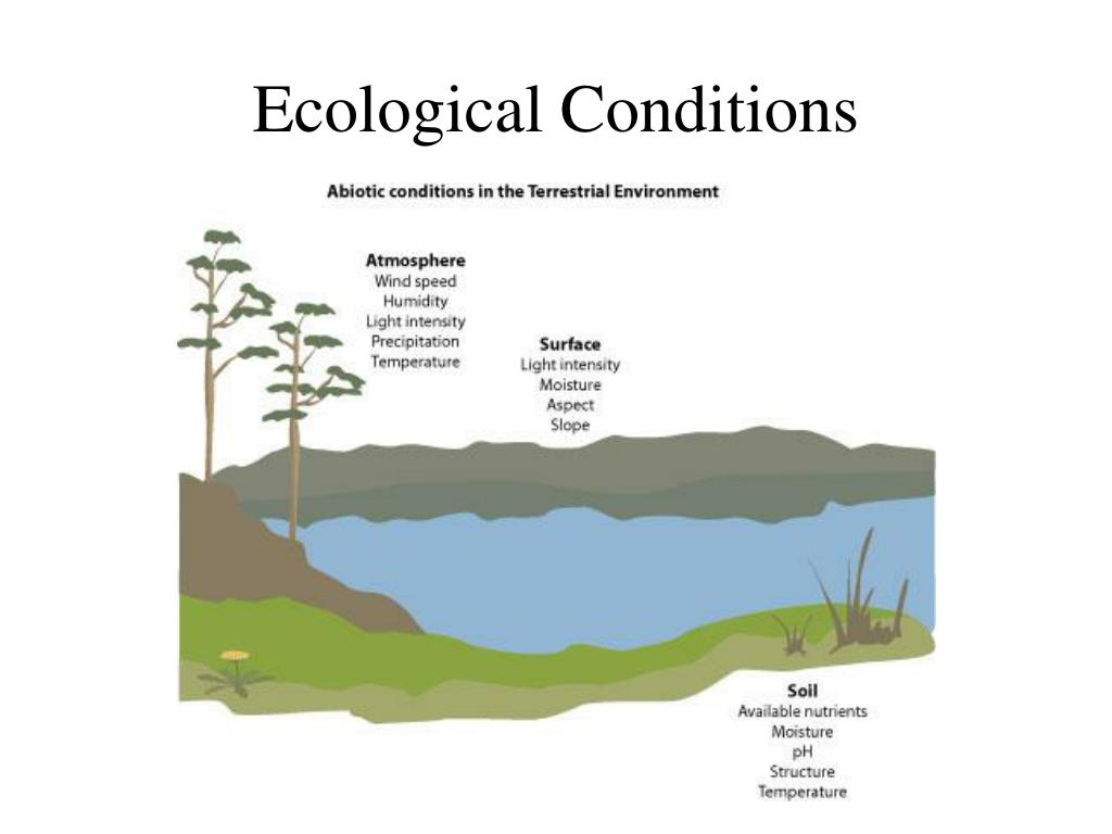 ecological conditions l.