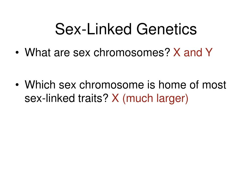 sex linked genetics l.