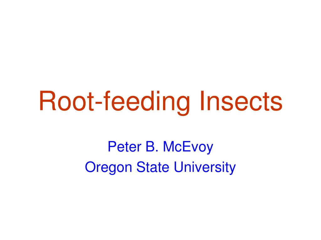root feeding insects l.
