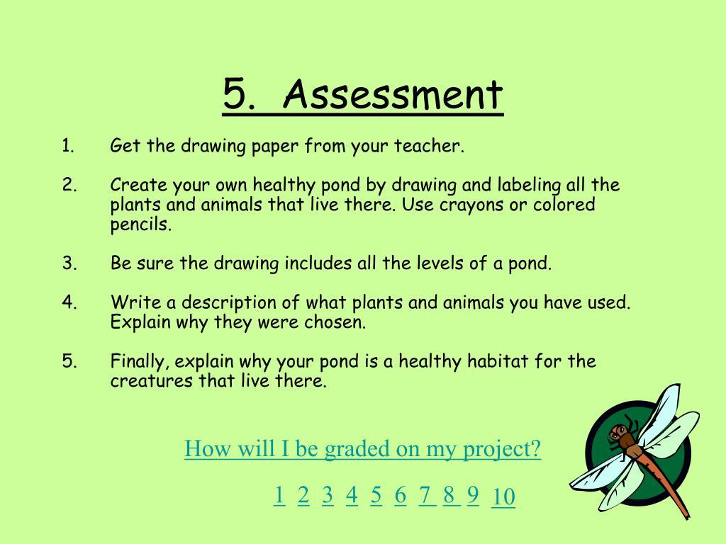 5.  Assessment