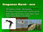 dragoman marsh now