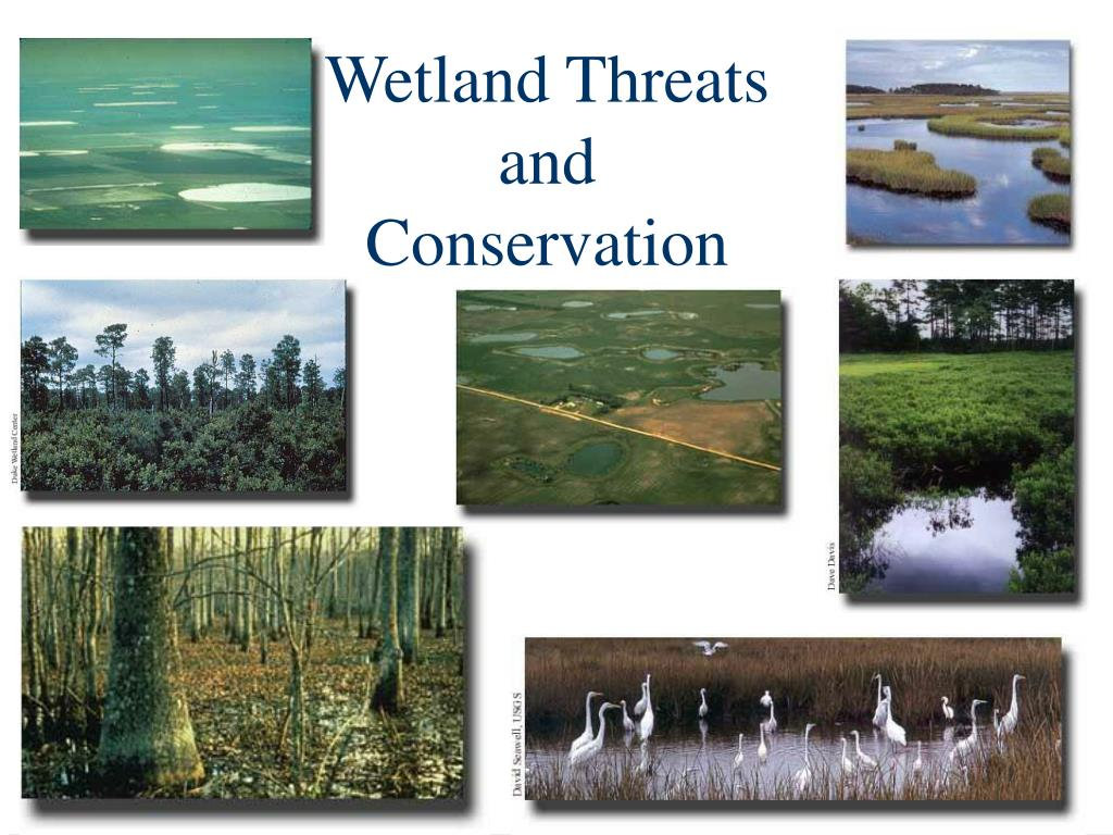 wetland threats and conservation l.