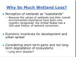 why so much wetland loss