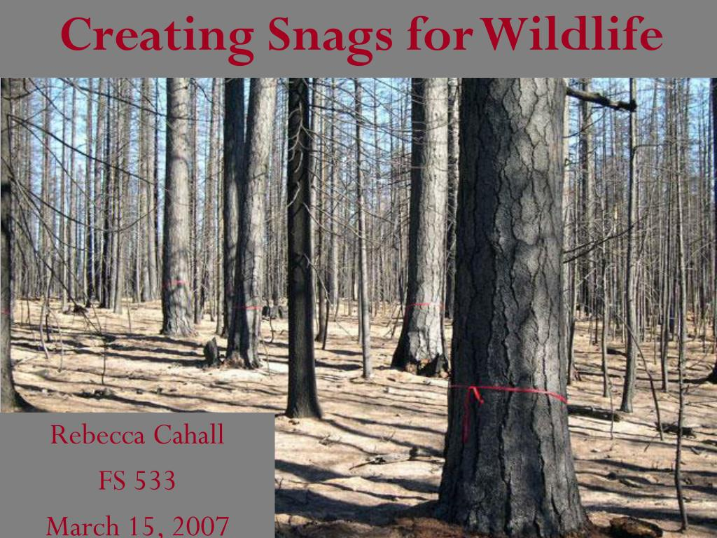 creating snags for wildlife