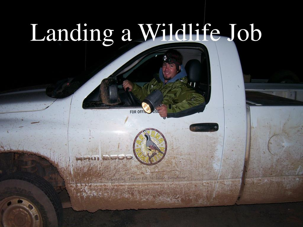 landing a wildlife job l.
