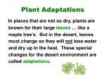 plant adaptations3
