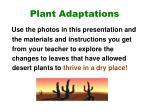plant adaptations4