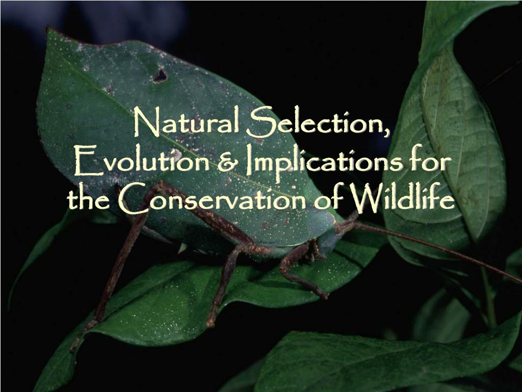 natural selection evolution implications for the conservation of wildlife l.