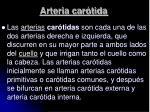 arteria car tida