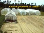 centro experimental da gafanha