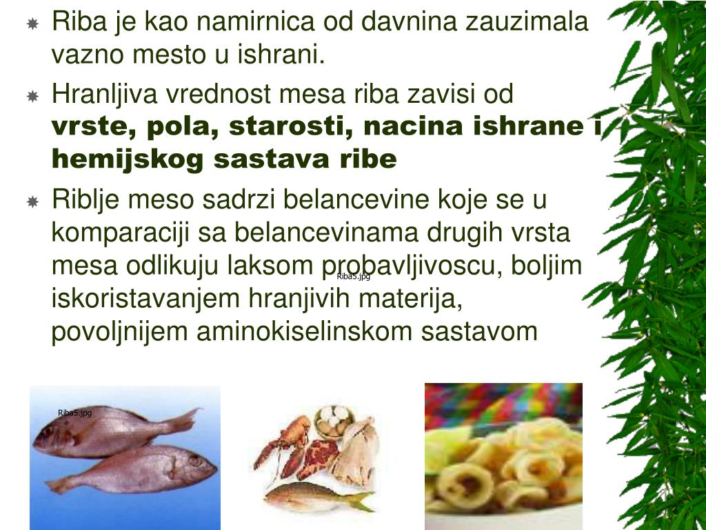 Riba je kao namirnica od davnina zauzimala vazno mesto u ishrani.