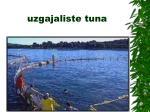 uzgajaliste tuna