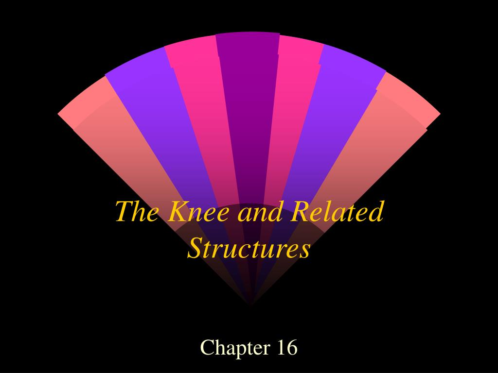 the knee and related structures l.