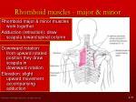 rhomboid muscles major minor