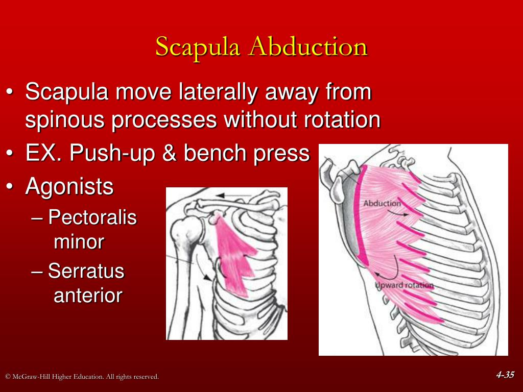 PPT - Chapter 4 The Shoulder Girdle PowerPoint ...