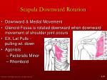 scapula downward rotation