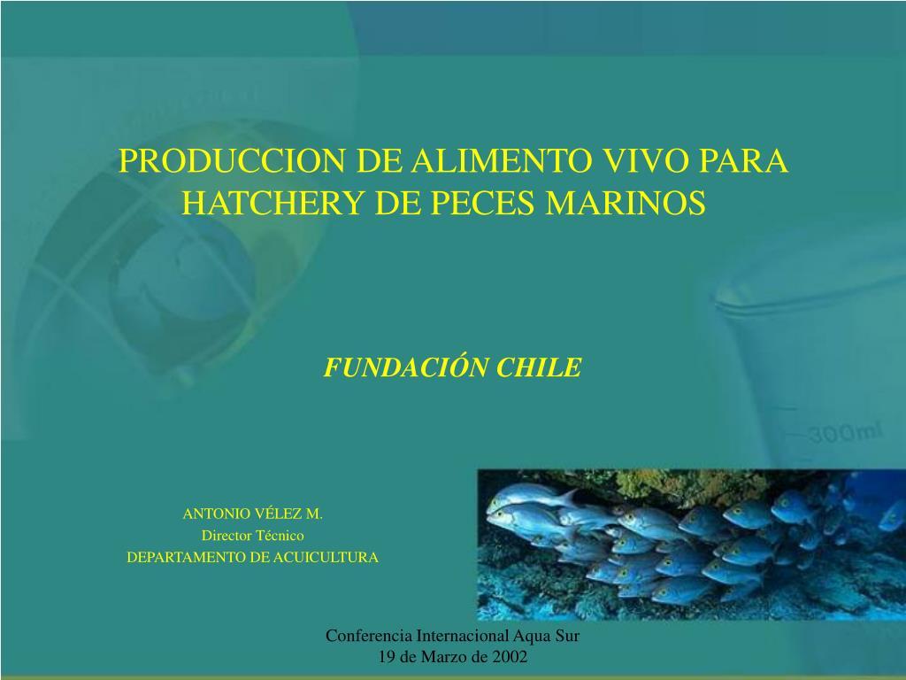 produccion de alimento vivo para hatchery de peces marinos fundaci n chile l.