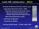 cattle snp collaboration ibmac