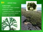 zelen riasy