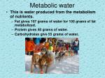 metabolic water