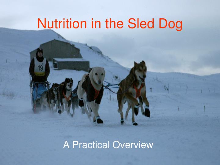 nutrition in the sled dog n.