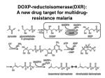 doxp reductoisomerase dxr a new drug target for multidrug resistance malaria