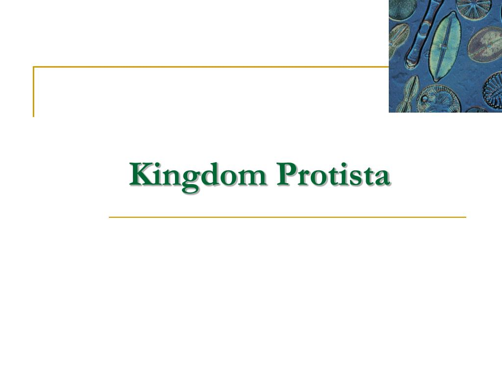 kingdom protista l.