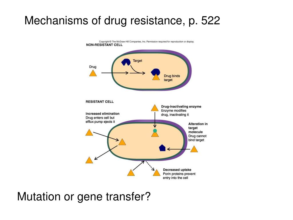 Mechanisms of drug resistance, p. 522