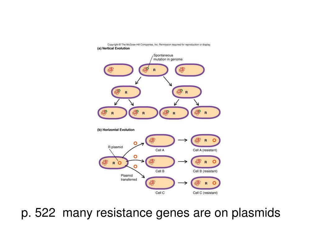 p. 522  many resistance genes are on plasmids