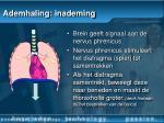 ademhaling inademing