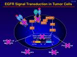 egfr signal transduction in tumor cells10