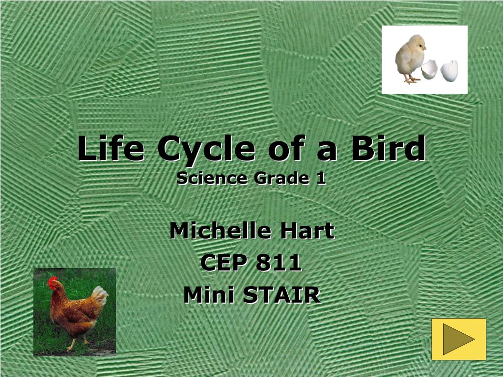life cycle of a bird science grade 1 l.