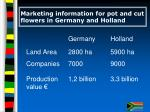 marketing information for pot and cut flowers in germany and holland