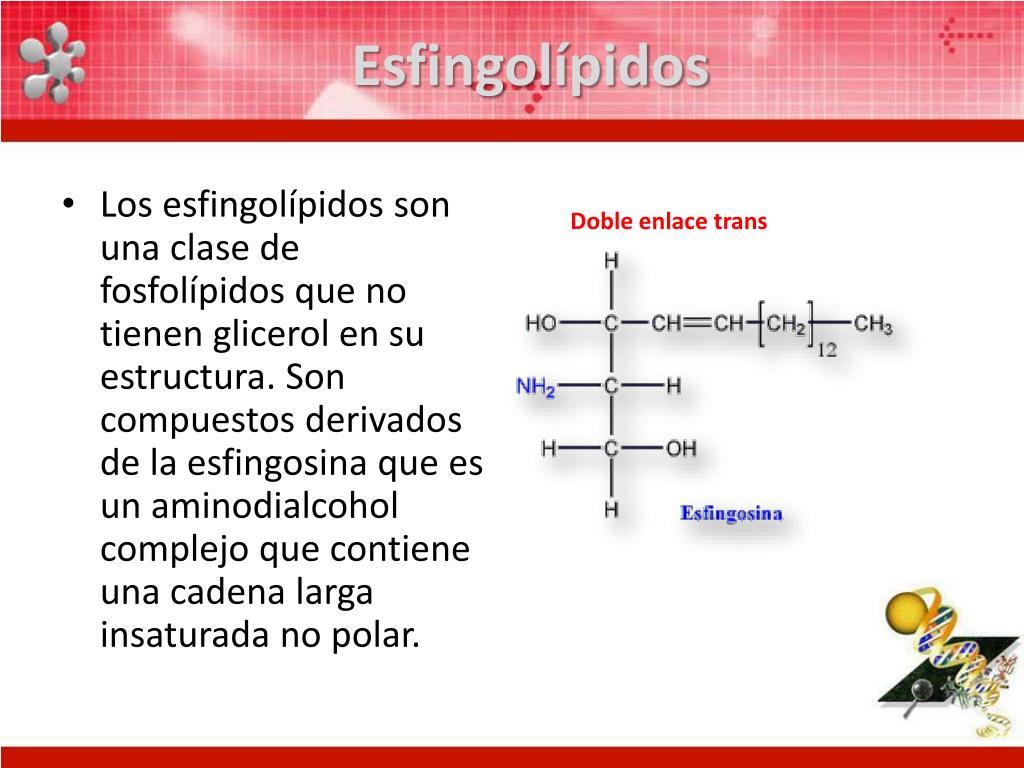 Esfingolípidos