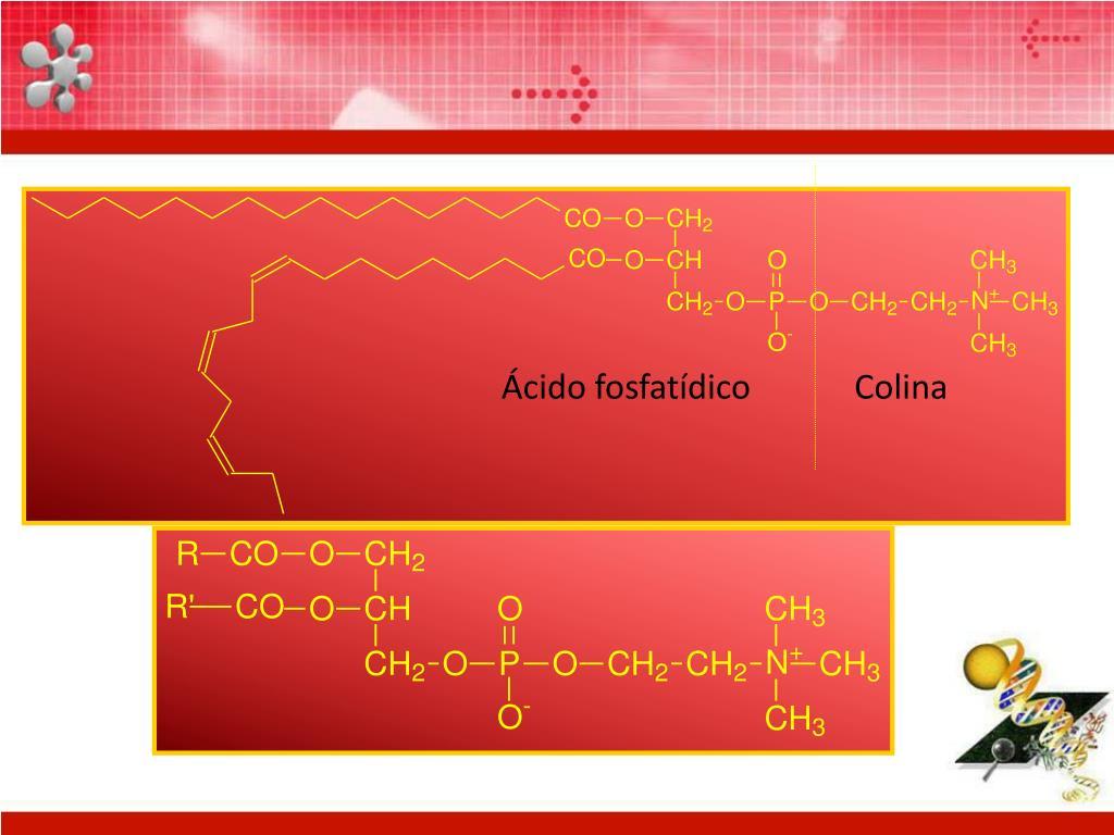 Ácido fosfatídico