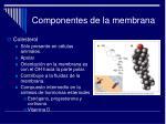 componentes de la membrana10