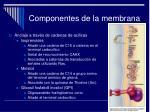 componentes de la membrana16
