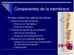 componentes de la membrana17