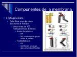 componentes de la membrana5