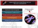 caracter sticas fenot picas de las c lulas cancerosas18